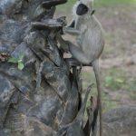 Photo Polonnaruwa fred Blanpain
